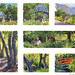 Descanso Gardens Gouaches by VHein