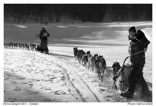 Magic Moments: Femundløpet, helmut-dietz-sled-dog-photography