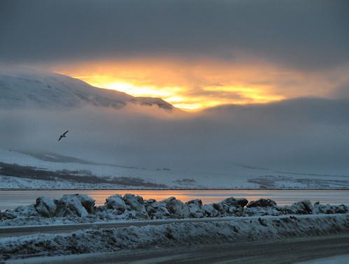 road winter sunset sun cold reflection bird ice water clouds bay iceland europe european glow fjord icy akureyri eyjafjörður toshio fjordeyjafjörður