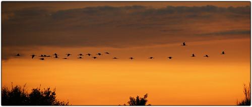 Flock Flight