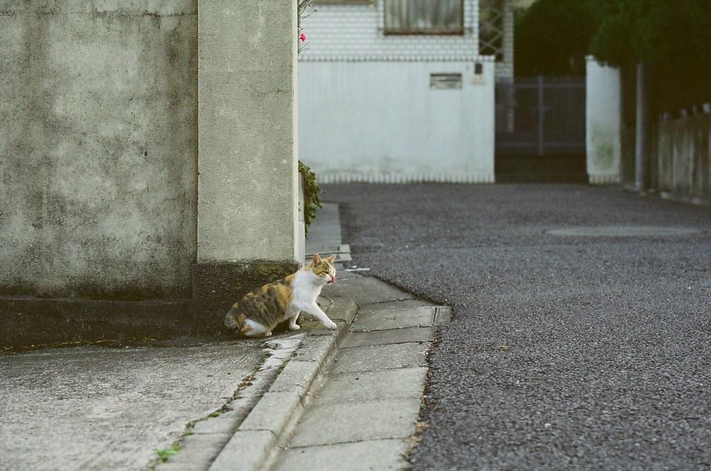 下北沢の猫