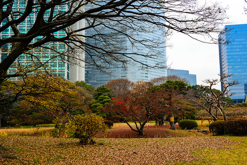 Autumn in Hamarikyu Garden