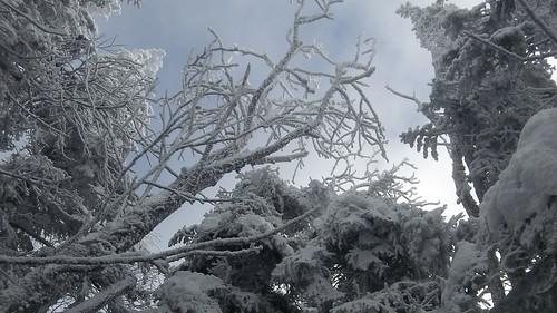 Tecumseh Winter