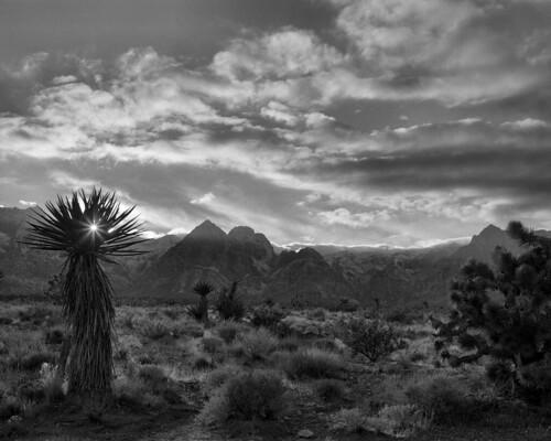 blackandwhite bw 120 film mediumformat landscape desert kodak trix joshuatree epson 6x7 redfilter xtol filmphotography mamiya7 tx400 redrockcanyonnationalconservationarea v750 80mmplanar
