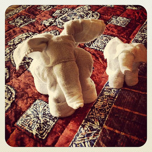Towel animals!