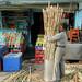 Sugarcane by bokage