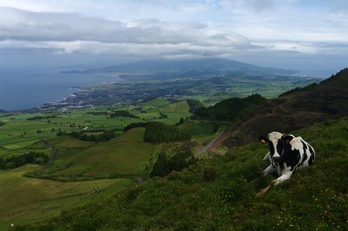ocean sea green portugal miguel rural island cow spring view hill may atlantic hills greenery overlook sao são archipelago azores saomiguel açores portugese sãomiguel