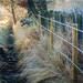 Morning frost by DollyArt