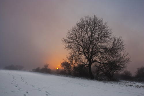 Dunstable Downs in Winter