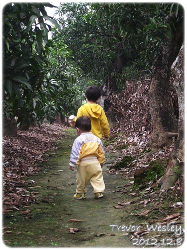 121208-一對寶在果園裡開心散步的背影