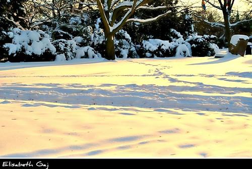elisabethgaj malmö sweden szwecja sverige skåne scandinavia europa winter natur nature park landscape besteverdigitalphotography bestevercompetitiongroup 100commentgroup