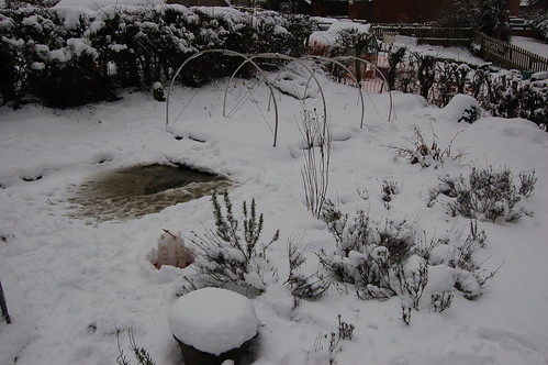 allotment snow Jan 13 8