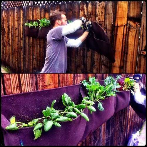 Life: Urban Gardening - Vertical Garden by Sanctuary-Studio