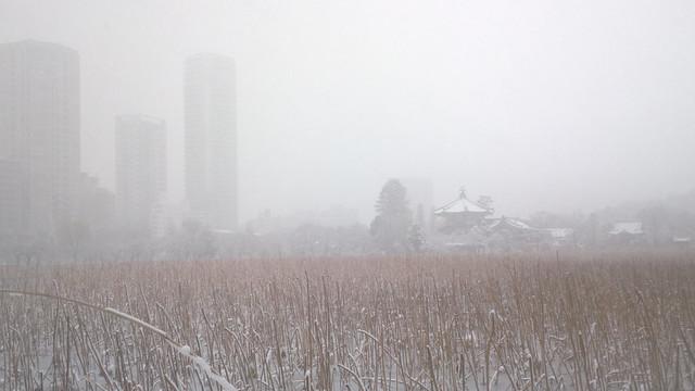 上野公園の冬