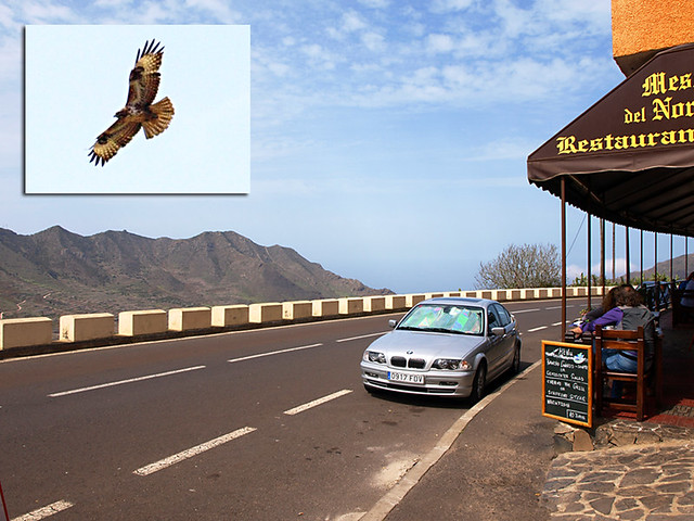 Meson del Norte and Buzzard, Tenerife