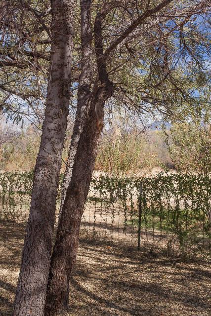 Vintage Orchard at Tumacacori