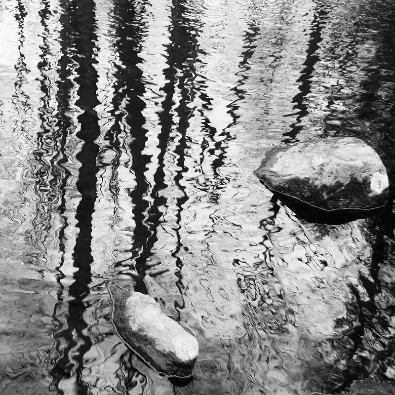 Trees reflected in Bee Brook with rocks