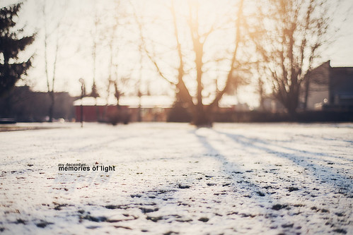 trees sunset sun snow nature field backlight zeiss sunrise canon germany munich münchen bayern deutschland bavaria eos 50mm shadows dof traffic bokeh 14 dreamy depth creamy ingolstadt tof 5dmkii
