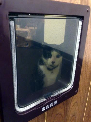 「加爾第」店貓