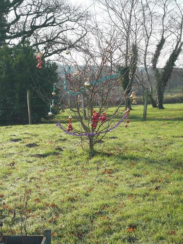 Christmas Tree 23.12.12