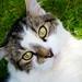 Cat by Oliver de Looze