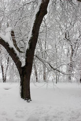 Snowstorm by Jeni Baker
