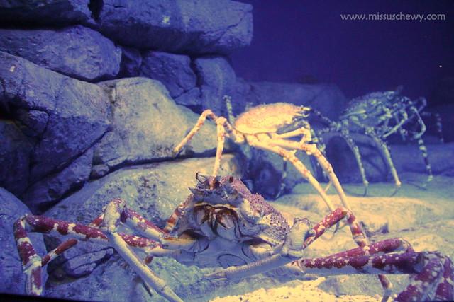 RWS S.E.A Aquarium 535