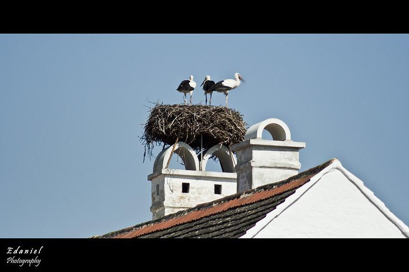 Storks