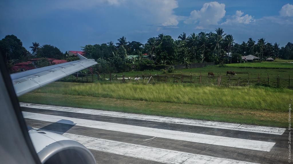 Коровы на взлетно-посадочной полосе в аэропорту Катиклан на Филиппинах