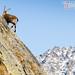 Qui domine la vallée... (Valsavarenche, Parco Nazionale del Gran Paradiso, Valle d'Aosta - Vallée d'Aoste)