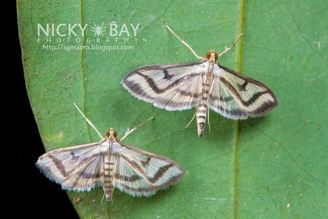 Moths - DSC_8892