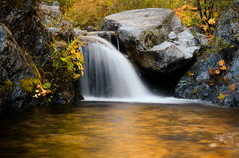 Heart of Gold (Brand Creek)