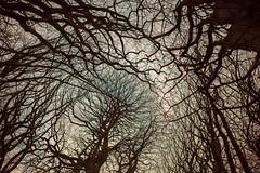 trees #15