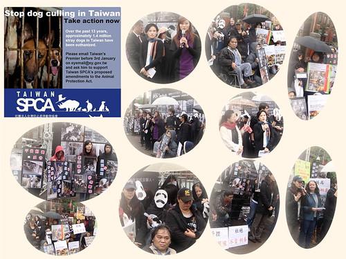 「活動」1/4(五)下午三點一起到農委會抗議,1/7(一)動保法修法最後機會,成為立委的後盾,對抗顢頇的官員。20130101
