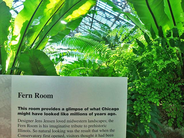 fern-room