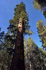 Big Trees 05