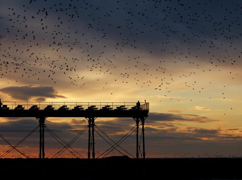 29149 - Starling Murmuration, Aberystwyth Pier