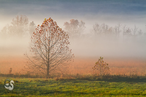 trees fall fog sunrise morninglight tn tennessee fallcolors smokies smokymountains cadescove canon7d endlessreach1 carlsshaw carlshawphotography