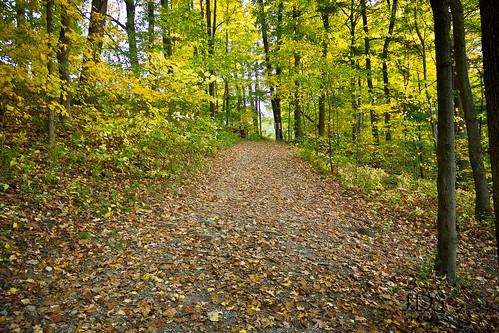 autumn fall colors canon path mcconnellsmill westernpennsylvania