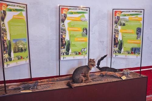 Museo del Valle de Tehuacán (36)