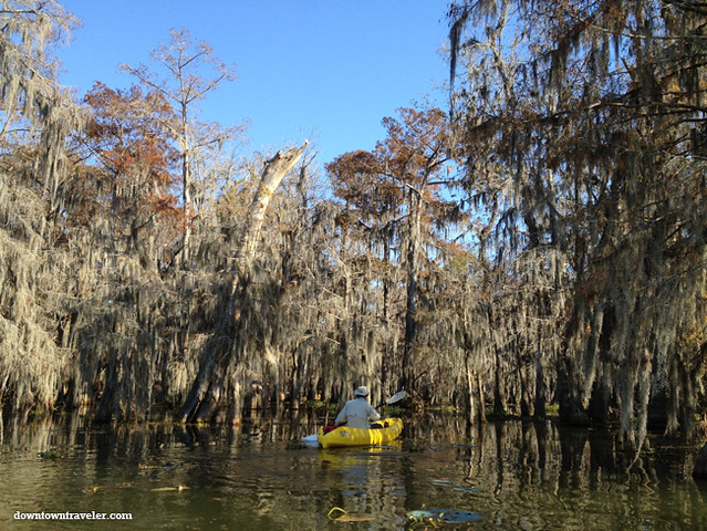 Cajun Country Alligator Swamp Tour 5