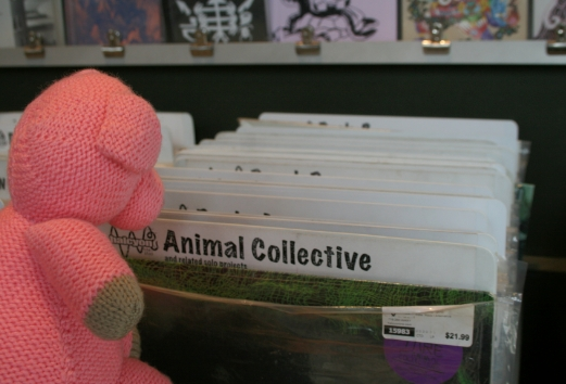 Pig Looking at Records