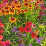 Great Gardens_Cantigny_July 2016