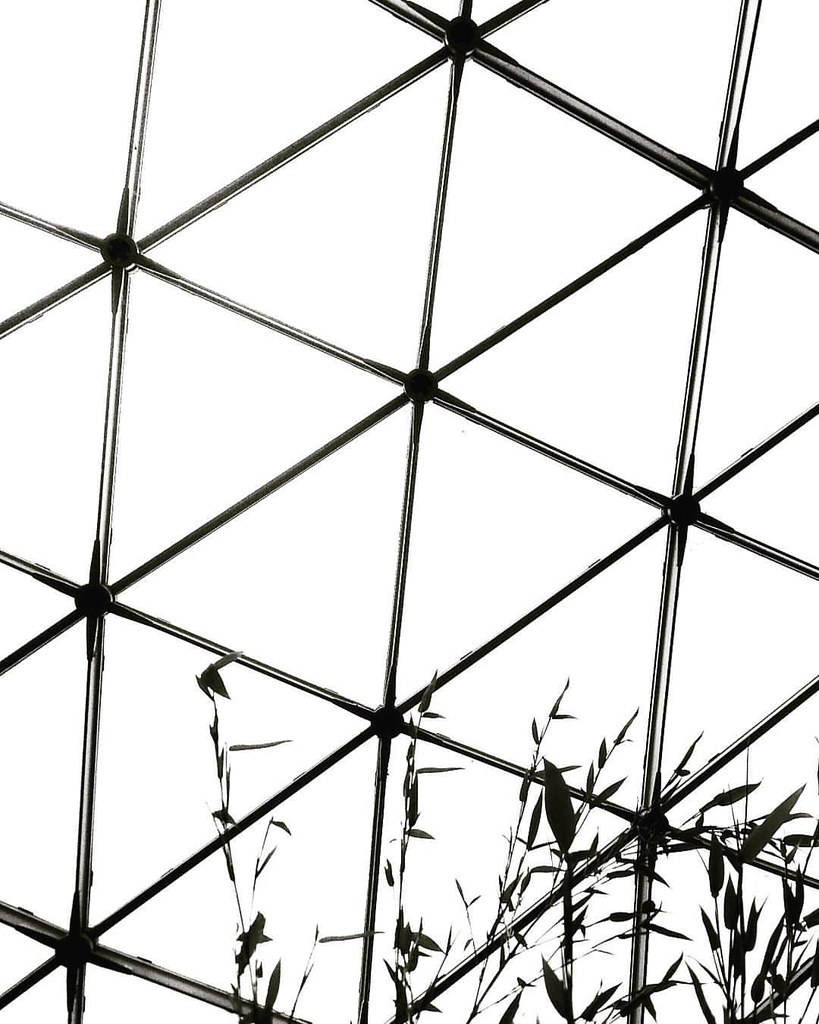 Lines and bamboo  #monochrome #blackandwhite #bw #biancoenero #lines #geometry #web #lines #highcontrast #black #white #minimal #minimalist #minimalistic #minimalism #lessismore #Beautiful #bamboo #nocolor #bicolor #Photography #photo #igersmilano #abstra