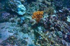 PP Divers 15