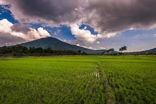 landscape philippines calauan calabarzon lagunamtkalusungan