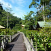 Borneo Rainforest Lodge (Janice Fiske)
