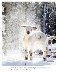 _MG_6747_Lamb_snowlr