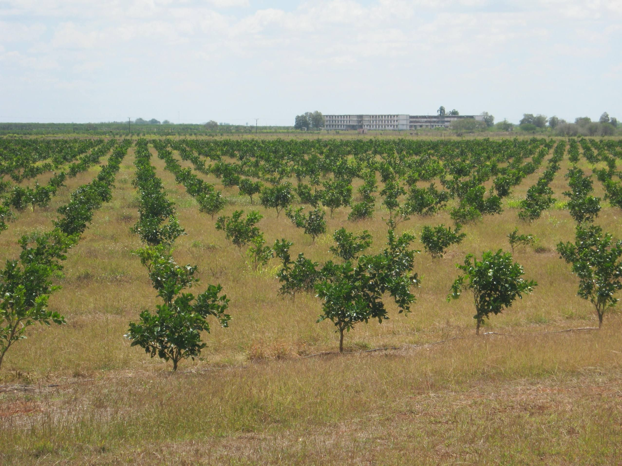 Q Amp A Mutant Fruit Trees To Grow In Saline Soils In Cuba