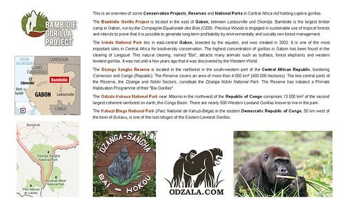 Gorillas: Central Africa
